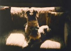 DunkelAndGretel-Couch